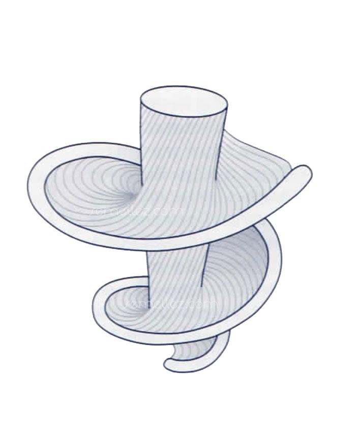 schéma de la spirale du cœur