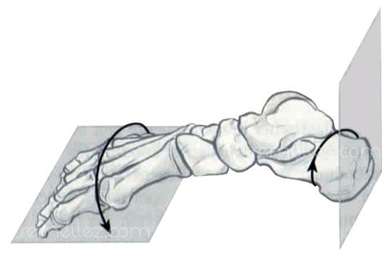 schéma des rotations du pied