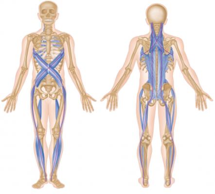 représentation de la spiral - anatomie